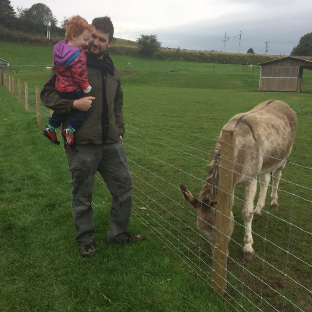 Dad and toddler in a field, looking at a donkey