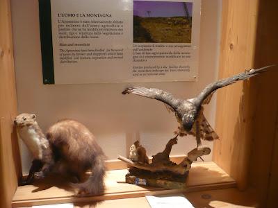 Animali nel museo della fortezza