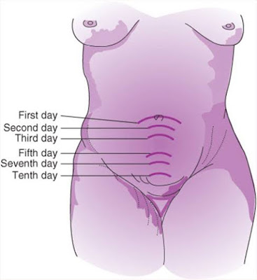 The full term uterus has grown at least ten times bigger than it was before pregnancy