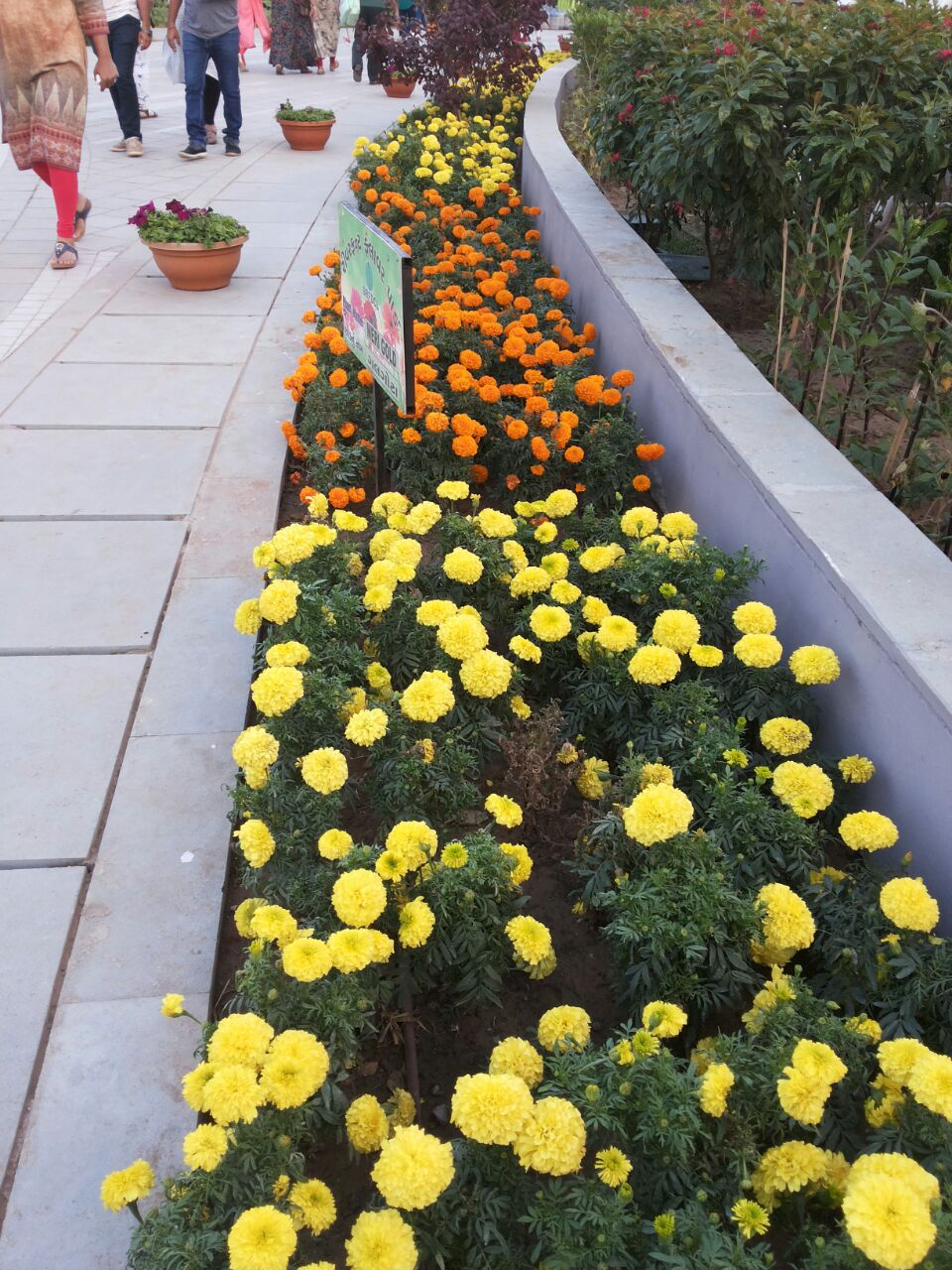 Riverfront Flower Park Beautiful Flowers And Plants Ahmedabad