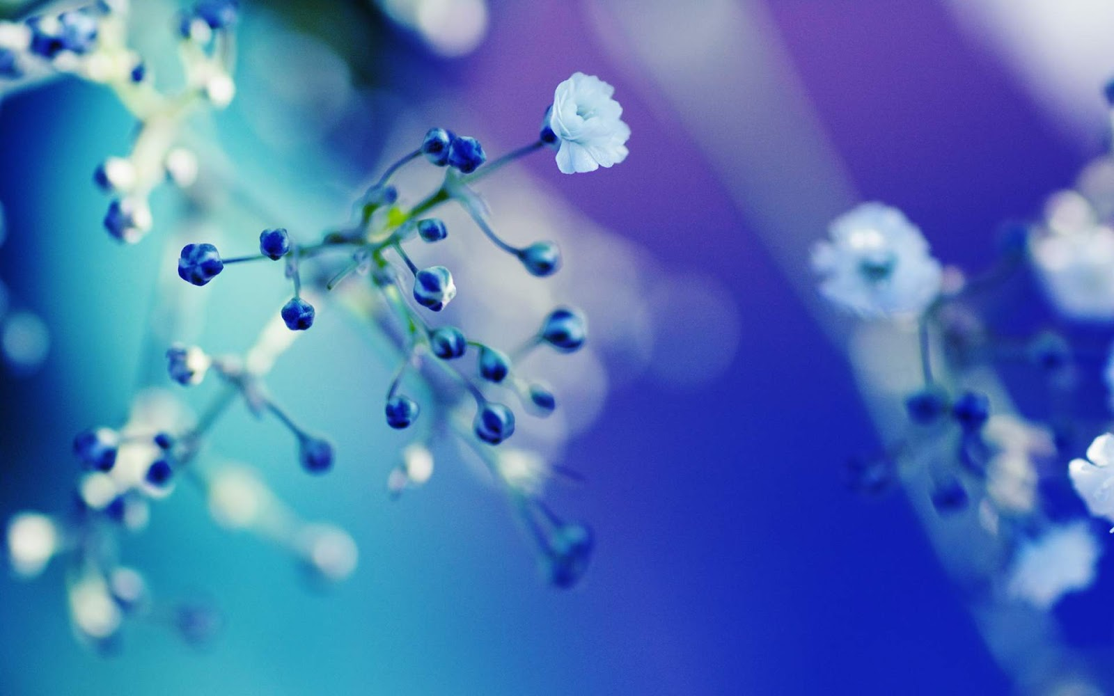 amazing flower: blue flower wallpaper