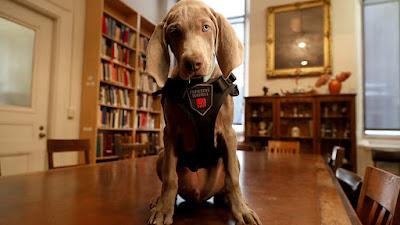 Αυτός είναι ο πρώτος σκύλος που εργάζεται σε Μουσείο και με τη μύτη του βρίσκει τα παράσιτα που καταστρέφουν τα έργα τέχνης