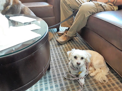 Dog friendly Hyatt Place Hotel in West Palm Beach, Florida. Pet travel tips. Travel with Dogs. Pet friendly travel. Dog welcoming hotel in West Palm Beach, Florida