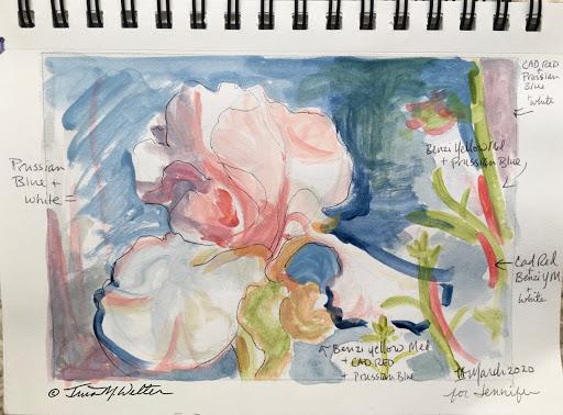 Pink Iris Sketch ©2020 Tina M.Welter