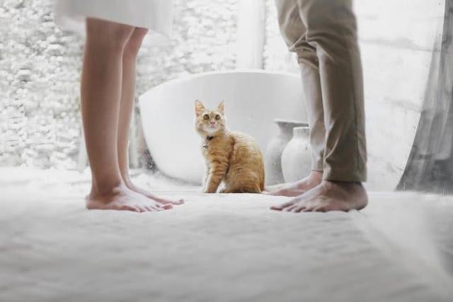 هل القطط تسبب العقم عند النساء والرجال