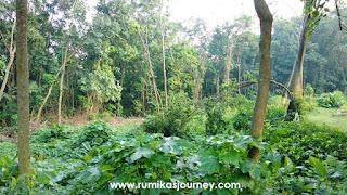 tempat wisata di depok hutan ui