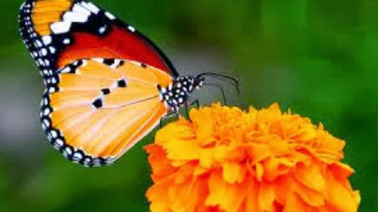 Cinta itu Seperti Kupu-kupu yang Terbang Tinggi