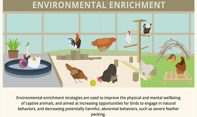 All It Takes to Keep a Chicken Happy #infographic