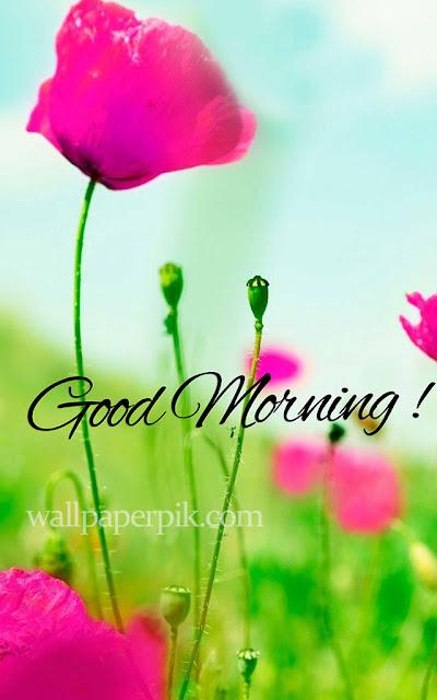 good morning pics image for whatsapp