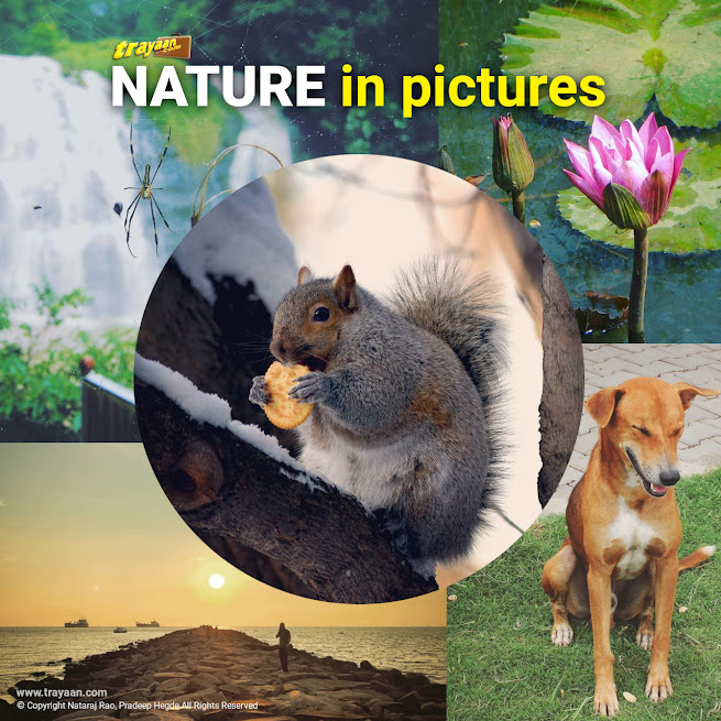 Trayaan Travel Throwbacks - Nature in pictures - Part 1