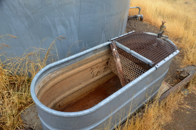 nearly dry horse trough