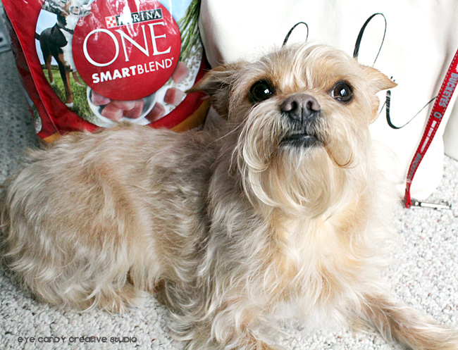 Purina One Smartblend, dog food, puppy love, DIY doggie bag