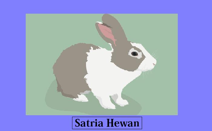 Harga Kelinci