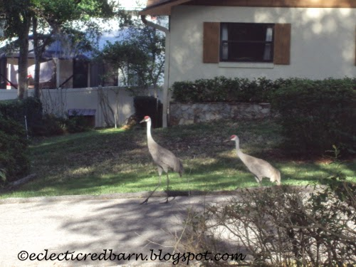 Eclectic Red Barn: Sandhill cranes going down the road