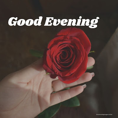 good evening photo with rose
