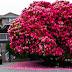 7 photos des plus beaux arbres du monde, le dernier semble venir d'un autre monde!