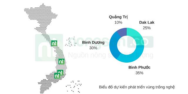 Nghệ tươi bao nhiêu tiền 1kg trên thị trường hiên nay - Nghetuoi.vn - Trang thông tin về nghệ tươi khô