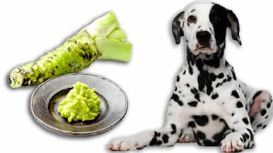 can dogs eat wasabi, can dogs have wasabi, my dog ate wasabi