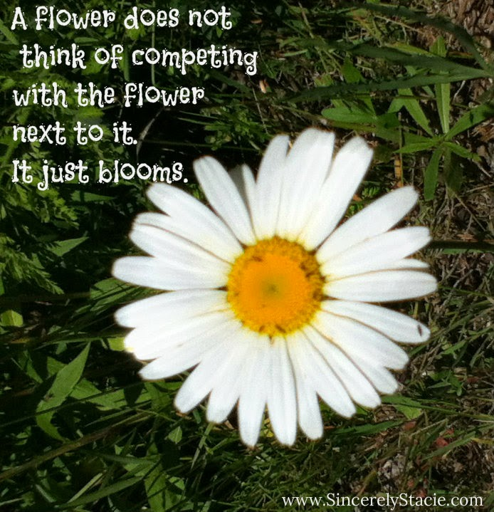 Quotes About Daisy Flowers Quotesgram