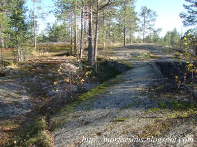 skog dejting