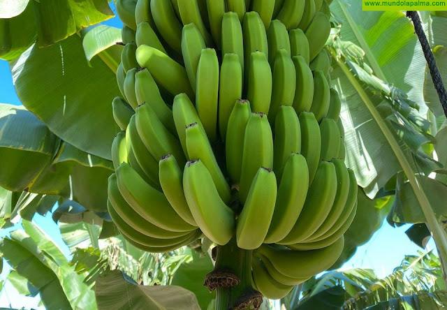El Gobierno canario convoca ayudas para la producción ecológica en agricultura y ganadería