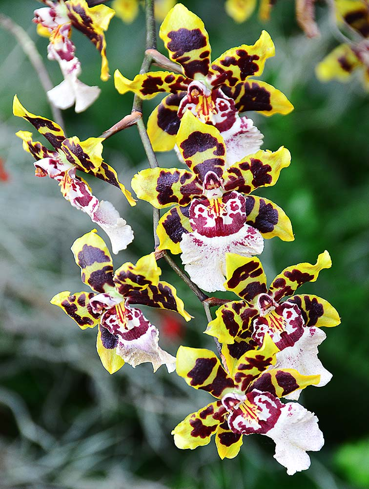 Orchid 09 by Jeanne Selep