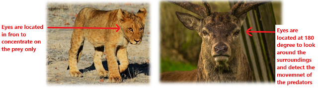 Prey and Predator, grassland habitat, terrestrial habitat, The living organisms and their surroundings, NCERT class 6, chapter 9, NCERT class 6th Science Solutions