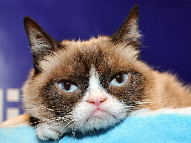 Lebih Mengenal Grumpy Cat