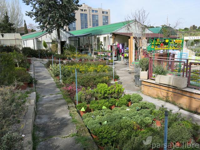 Visita al centro de jardiner a pradillo paisaje libre - Centros de jardineria madrid ...