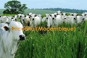 Pecuária (Moçambique)