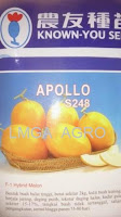 melon kuning apollo,melon f1 apollo,benih melon kuning f1 apollo,lmga agro,known you seed