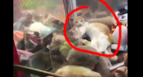 Ayo Tebak, Ini Kucing Beneran Atau Boneka ?