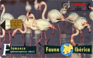 Tarjeta telefónica Flamenco (Phoenicopterus ruber)