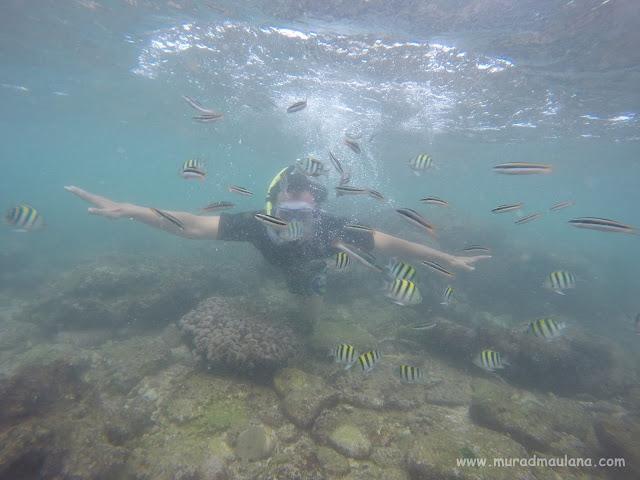 Saya Snorkeling di Pantai Nglambor 3