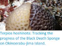 https://sciencythoughts.blogspot.com/2017/12/terpios-hoshinota-tracking-progress-of.html