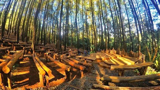 Hutan Pinus Mangunan Jogja