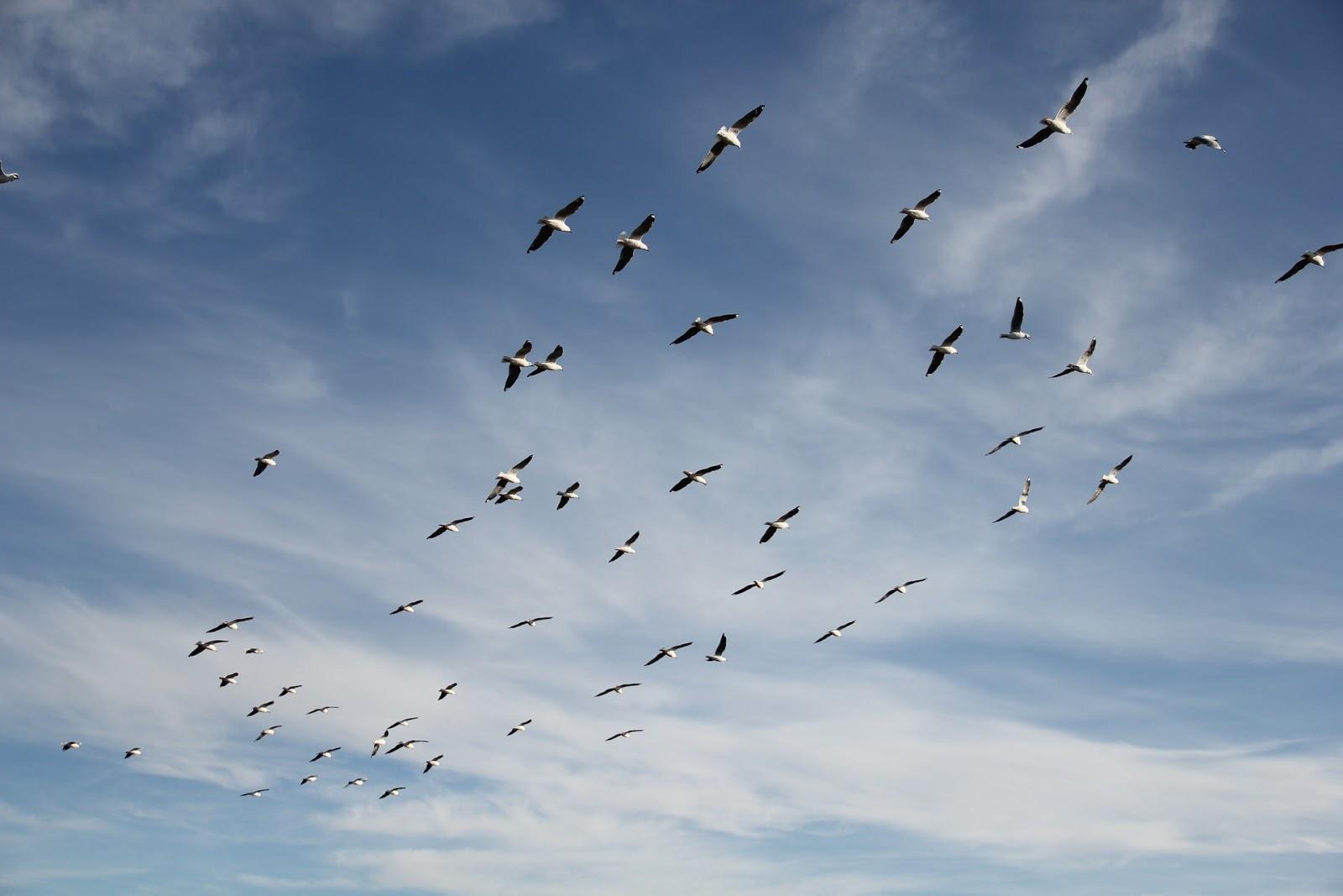 青空を飛んで行く白い鳥の群れ