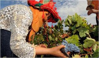 المغرب يسعى لتصدير النبيذ نحو السوق الصينية