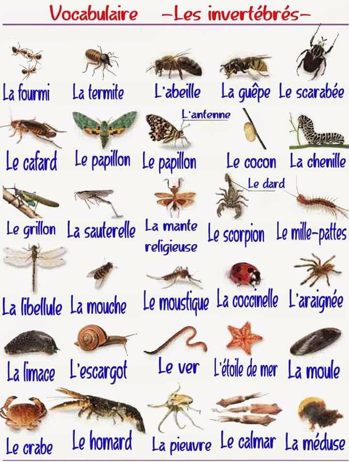 Vocabulaire français - Les invertébrés