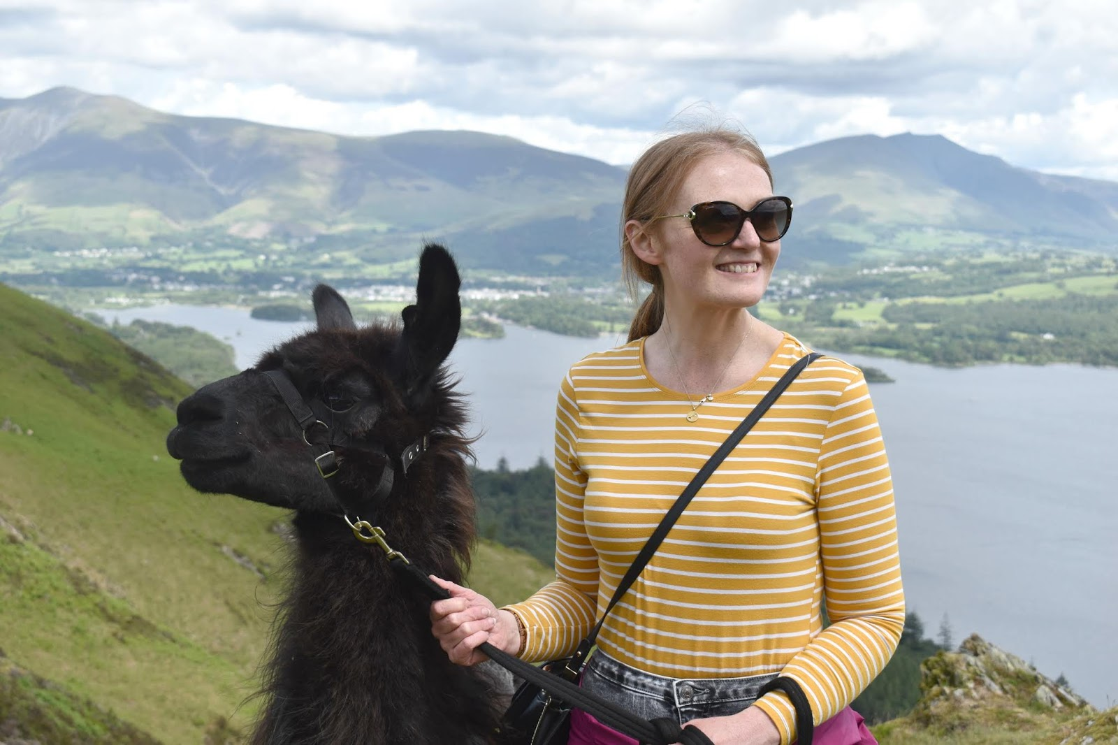 Once Upon a Llama in Lake District - Llama Trek
