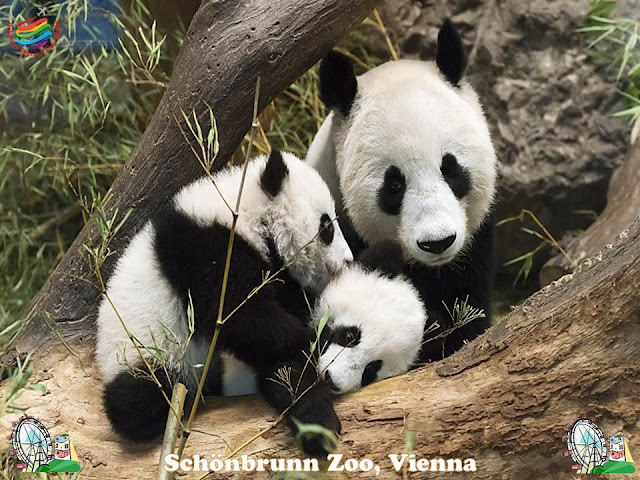 Schönbrunn Zoo, Vienna