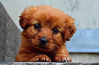 خلفيات كلاب رائعة
