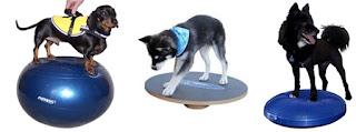 exercícios de equilíbrio em cães