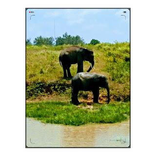taman wisata gajah way kambas lampung