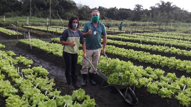 Colheita de alface e temperos da Horta Municipal orgânica será doada às famílias em vulnerabilidade social