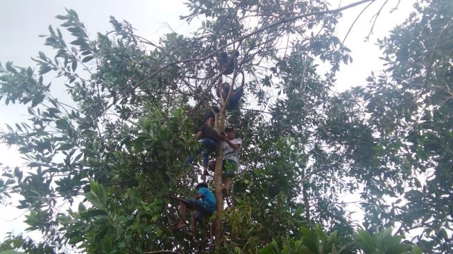 Miris! Puluhan Bocah Terpaksa Panjat Pohon Belasan Meter Demi Dapatkan Sinyal untuk Belajar