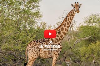Kruger National Park Safari in Afrika, Übernachtem im afrikanischen Busch, WELTREISE
