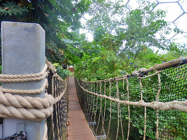 The rope bridge amongst the tree tops at the Eden Project, Cornwall