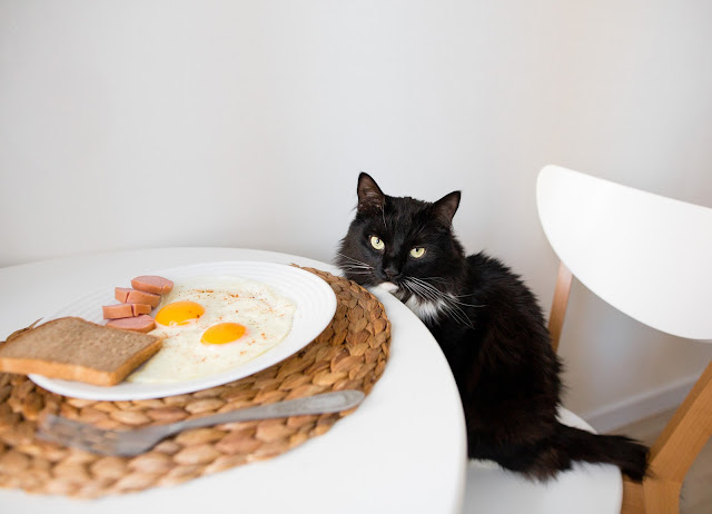 A tuxedo cat sits on a chair and looks at a fried breakfast, thinking of eating some