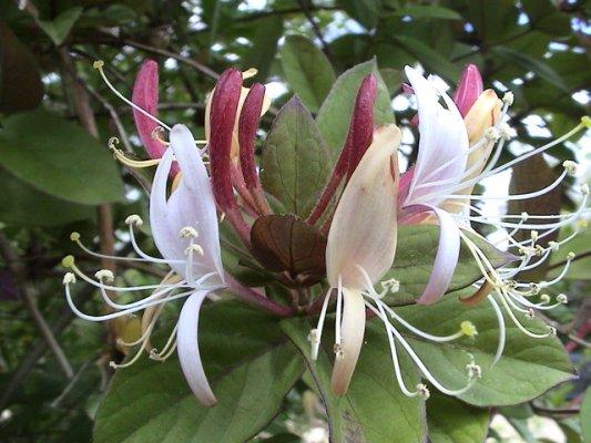 As dez flores mais cheirosas do mundo